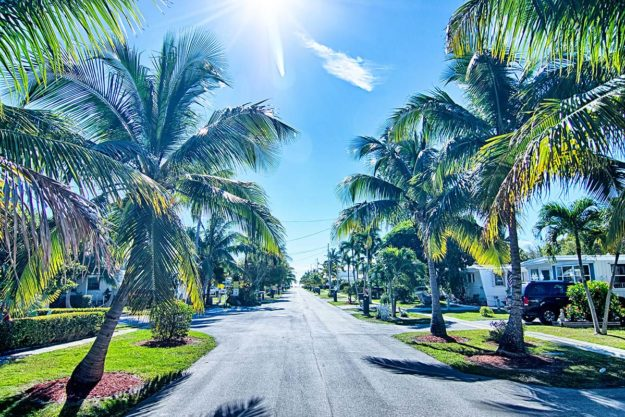 Florida alcohol rehab palm tree lined road